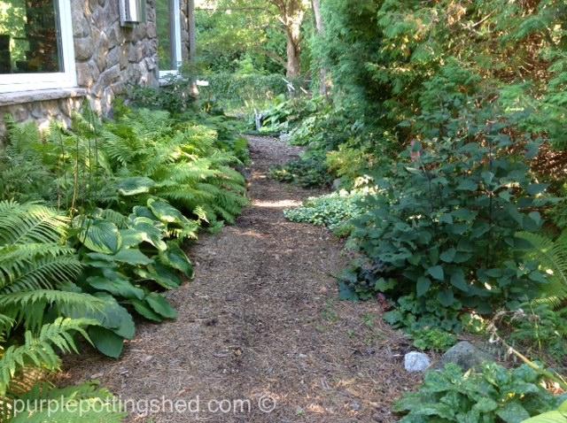 Side path.jpg