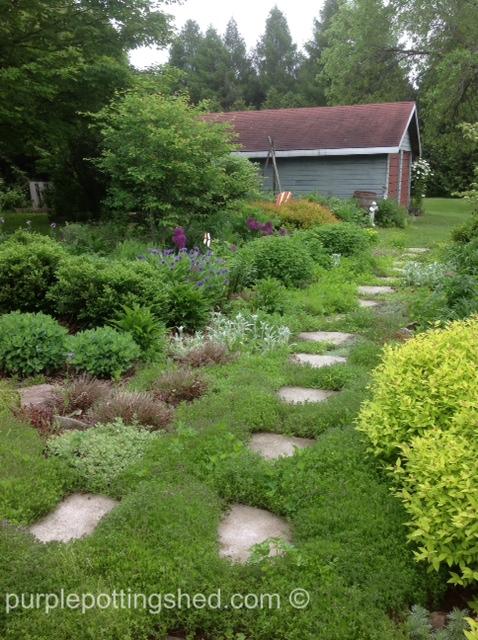 Thyme path.jpg