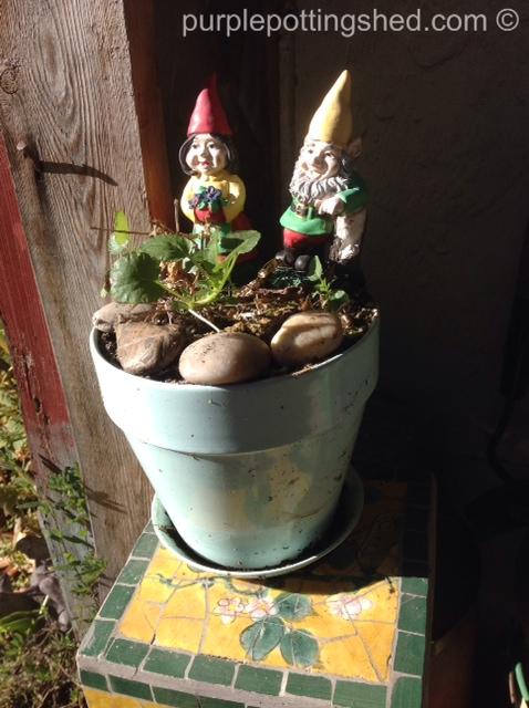 Gnomes, little ones.jpg