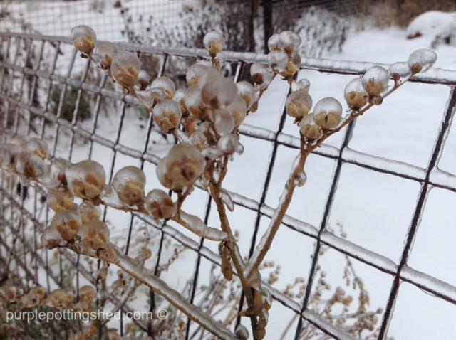 Ice pearls.jpg