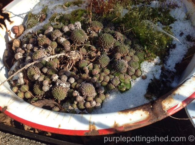 Enamel pan with rust.jpg