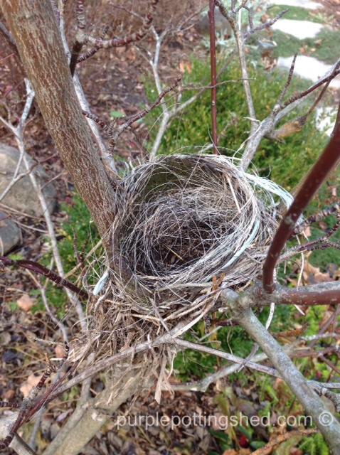 Nest.jpg
