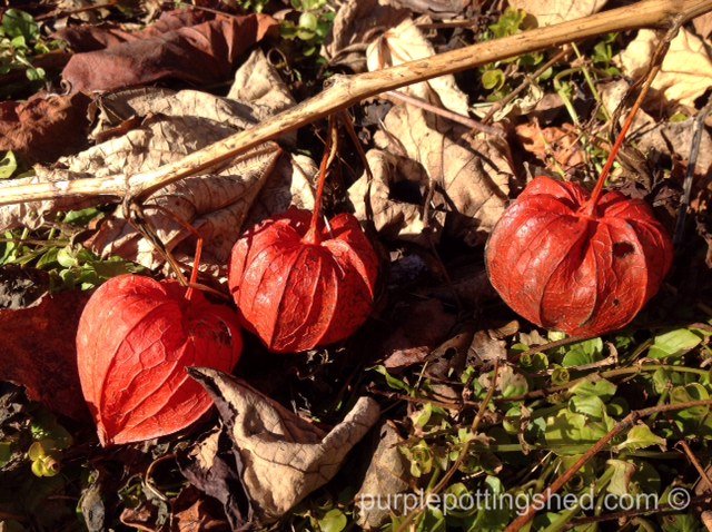 Chinese lanterns, 3 in a row.jpg