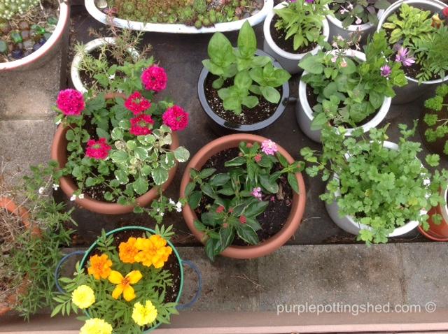'Pot' garden.jpg