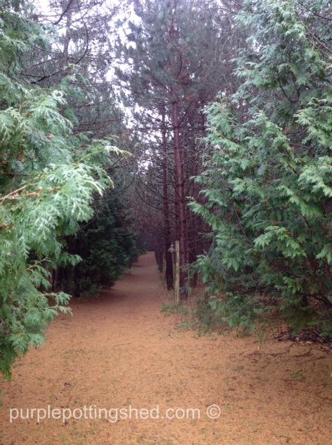 Main path.jpg