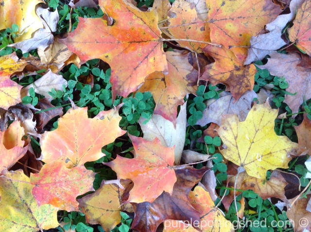 Classic fall leaves.jpg