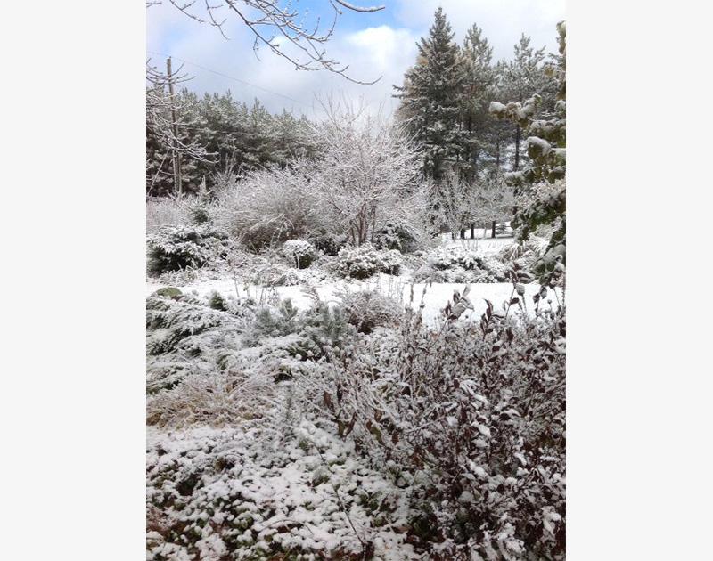 Front Garden, snow