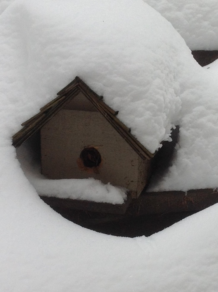 Birdhouse in snow 1.jpg