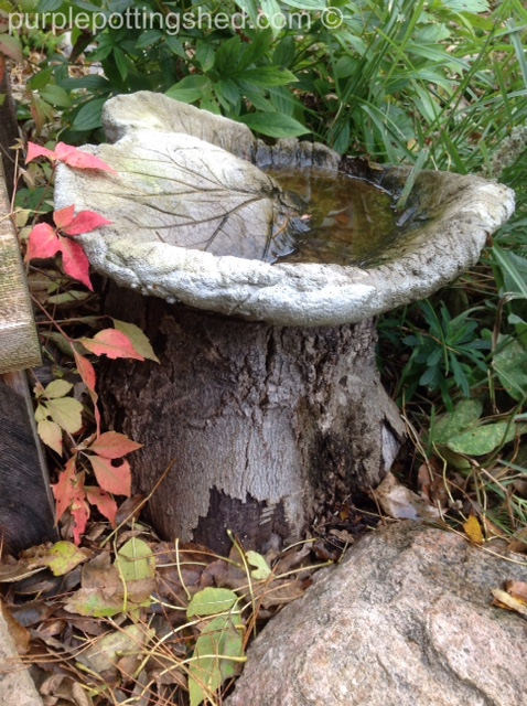 Chunk of wood with birdbath.jpg
