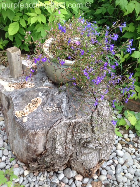 Chunk of wood with lobelia.jpg