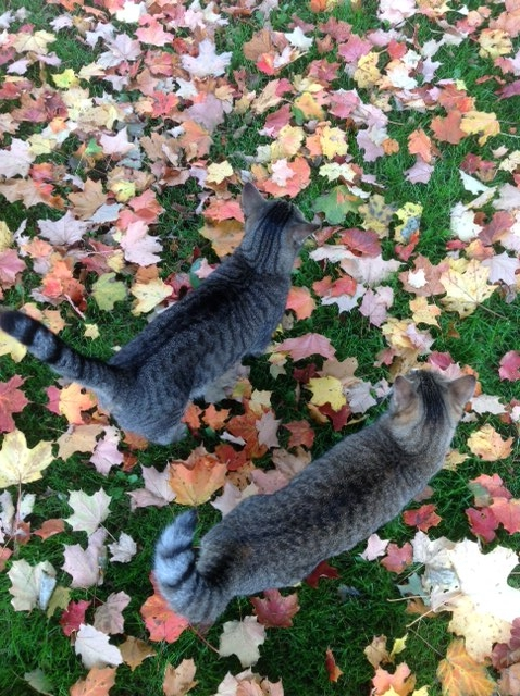 Tom and Ruby in leaves.jpg
