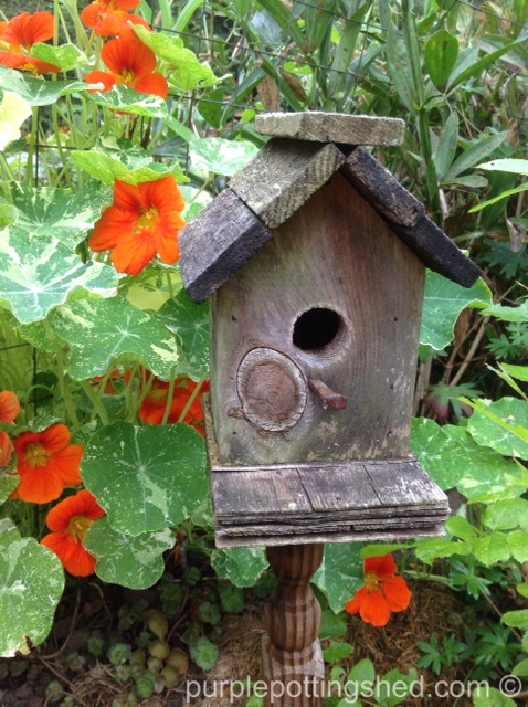 Birdhouse on spindle with nasturtiums.jpg