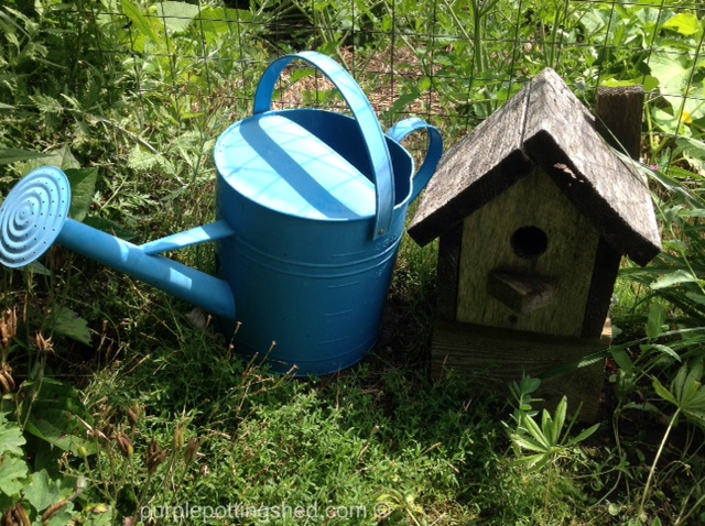 Watering can in blue.jpg