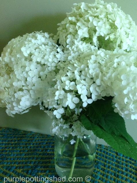 Bouquet, hydrangea.jpg