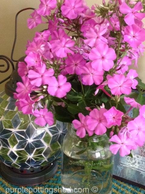 Bouquet, phlox.jpg