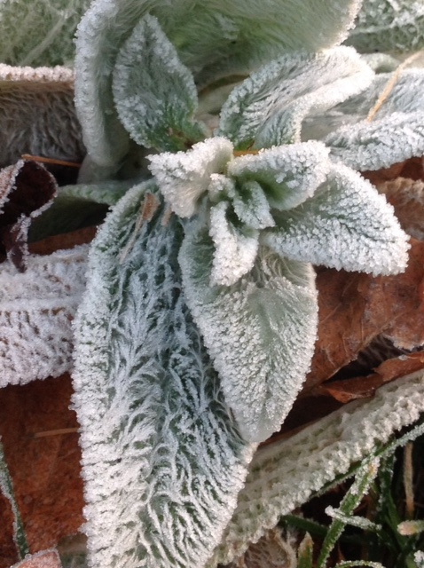 Frost 1.jpg