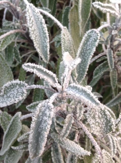 Frost 3.jpg