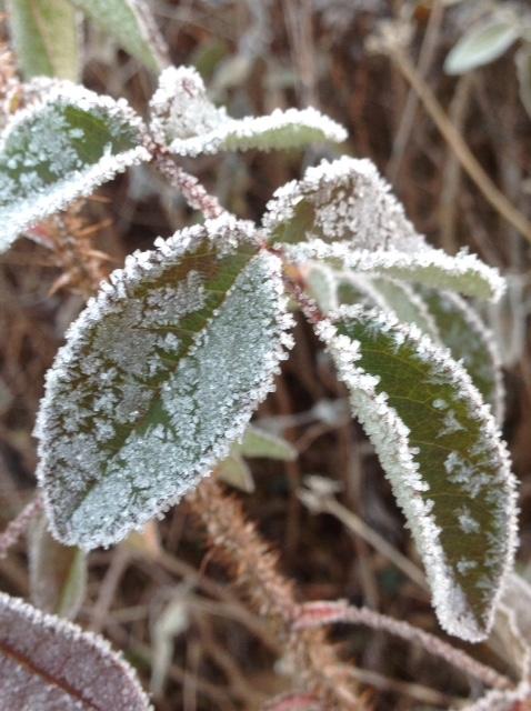 Frost 4.jpg