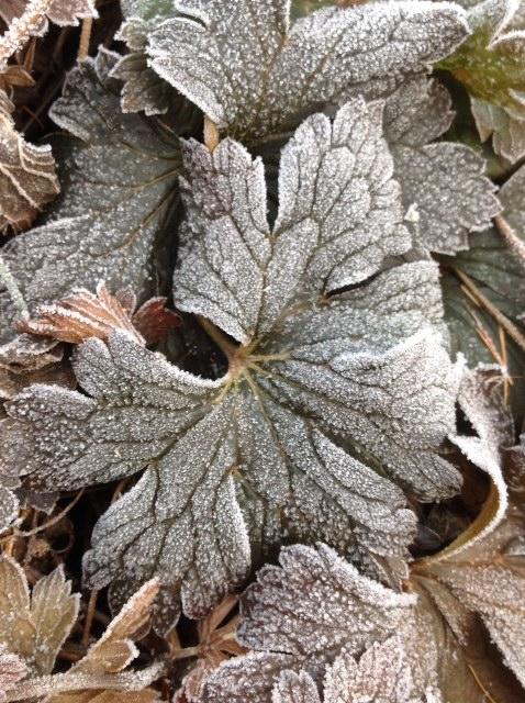 Frost 6.jpg