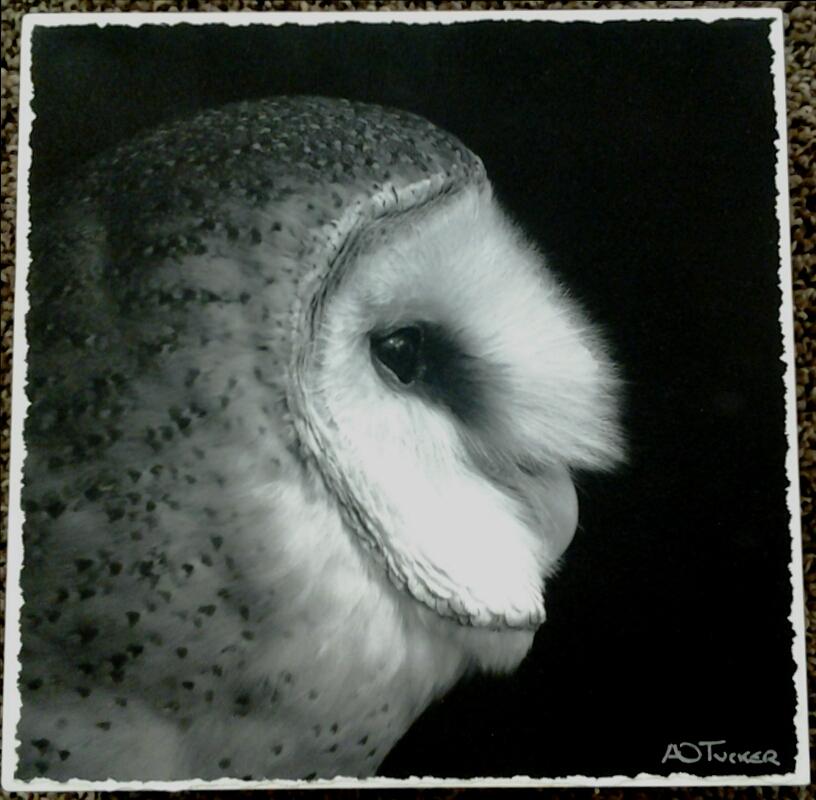 """Owl""  - Photograph"