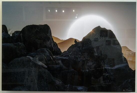 """Bird on Rock Art"" original photo on acrylic by A O Tucker - $395 (24"" x 16"")"