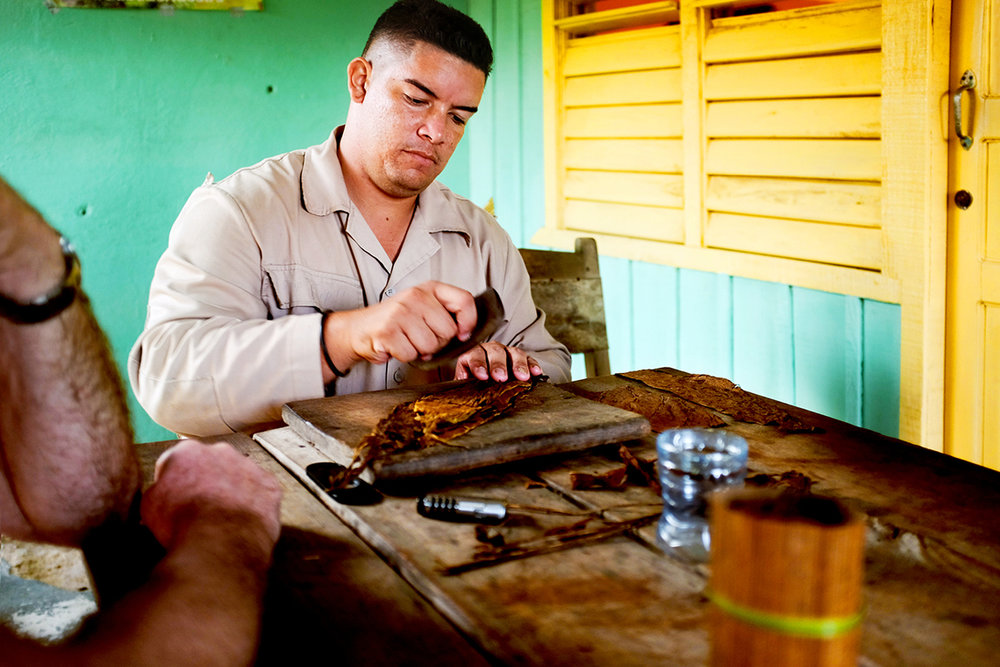 rolling cohibas with the local tobacco plantation