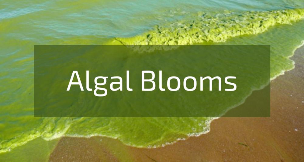 Algal Blooms.png