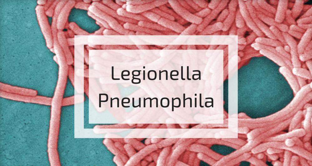 Legionella Pneumophila.png