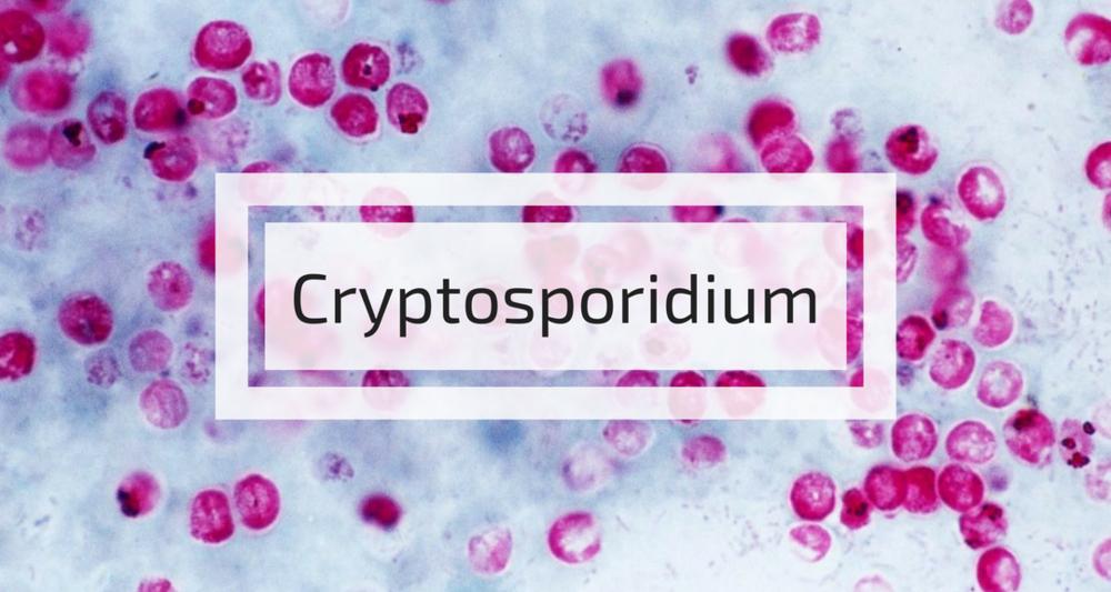 Cryptosporidium.png