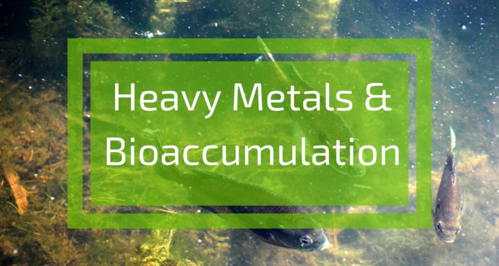Bioaccumulation-Title_1024x1024.png