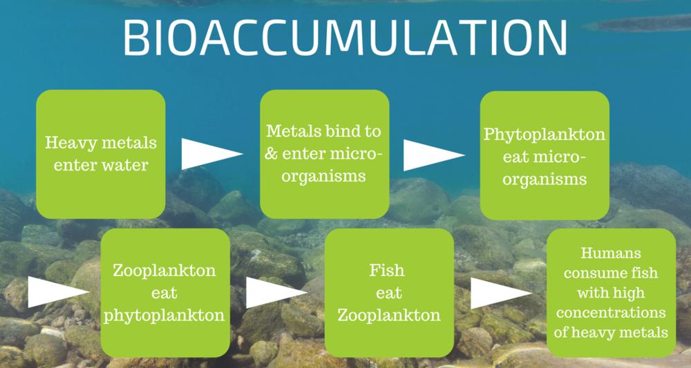 Bioaccumulation_graphic_f52cb486-f663-4ae4-a619-93dca87872dd.png