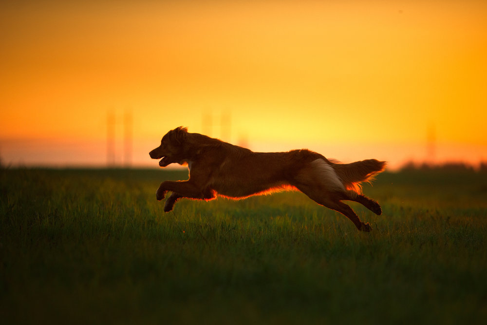 Keep your pets running smoothly. - Check out our formulas just for pets.