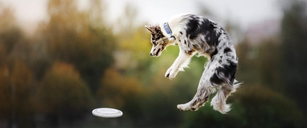 Dog Jumping 1920x800.jpg