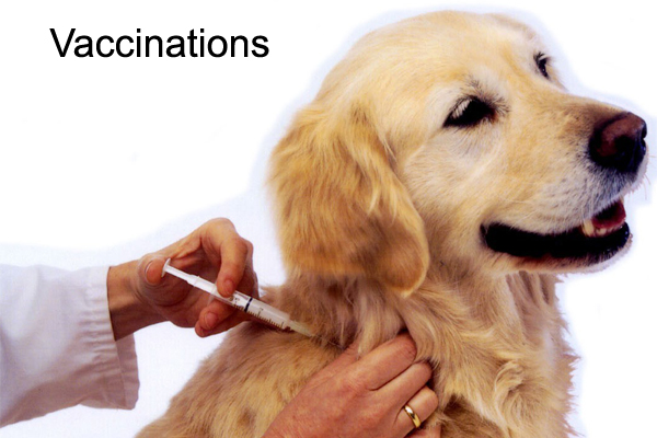 vaccinations.jpg