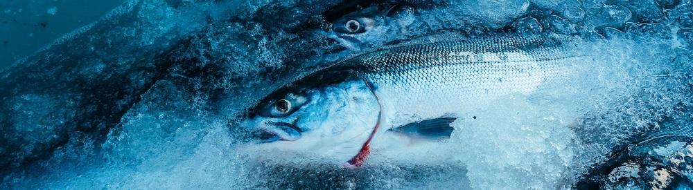 Wild Sockeye Salmon