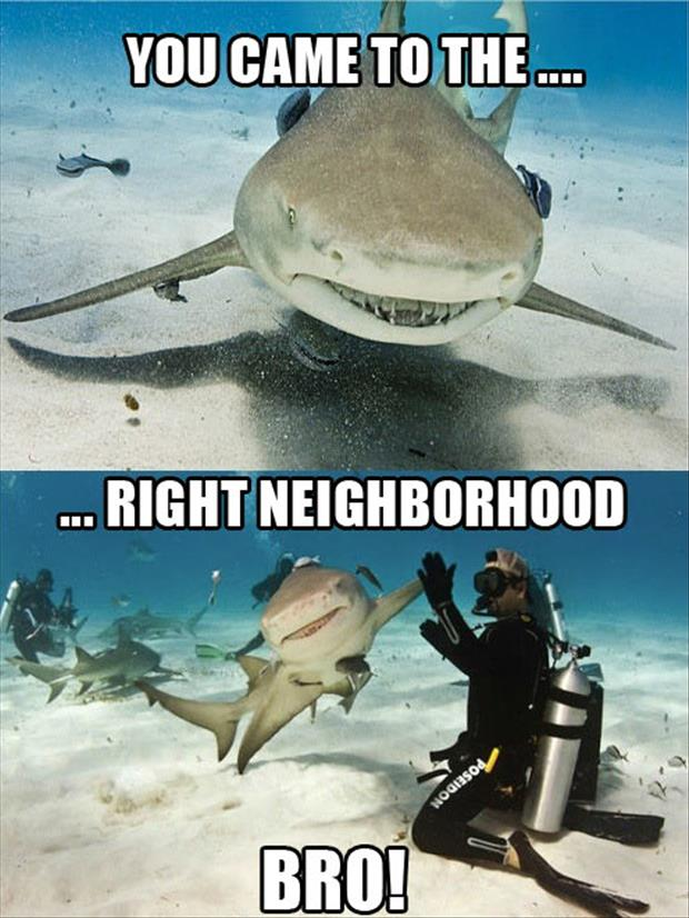 You-Come-To-The-Right-Neighborhood-Funny-Shark-Meme-Image.jpg