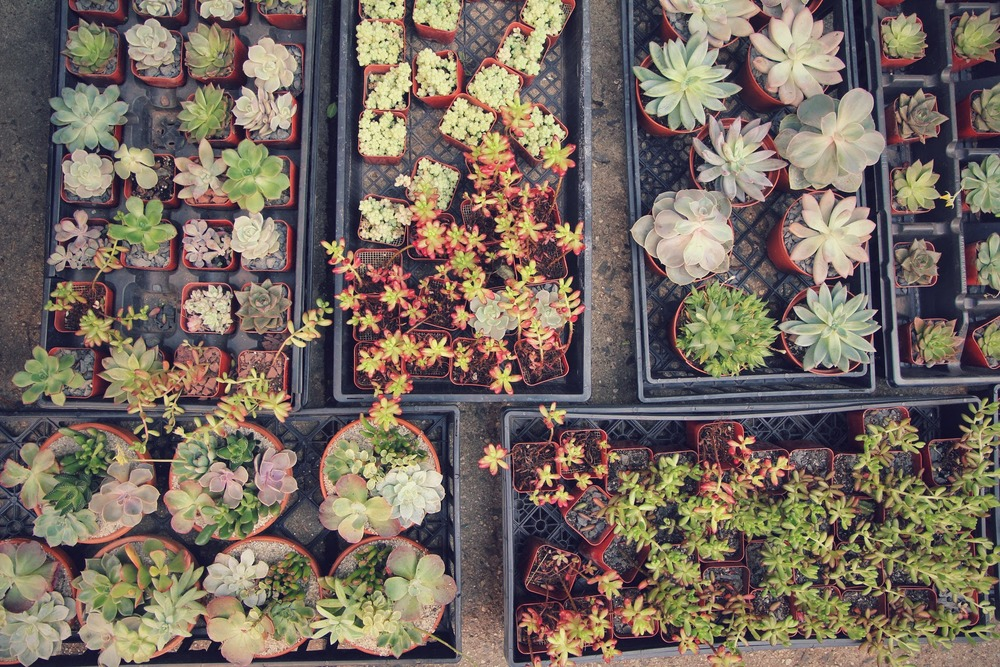 Succulents are readily available in the summer and a unique and hardy choice.