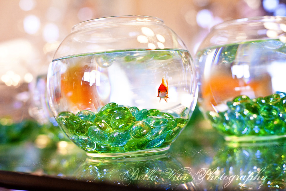 Fishbowls for an aquatic theme!