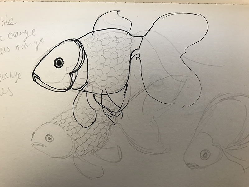 Goldfish sketches