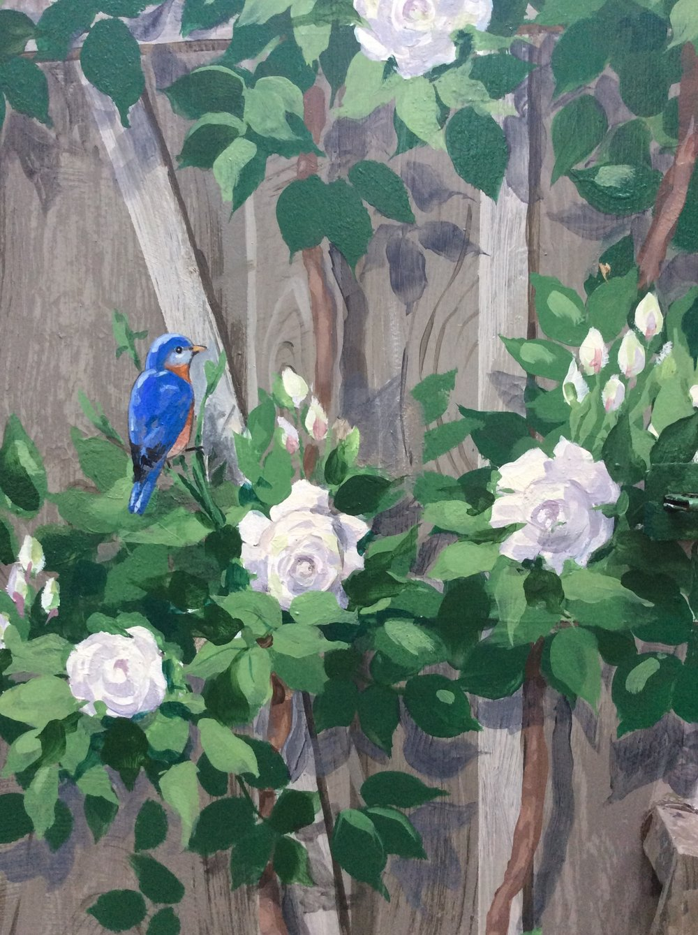 The NY State Bird, the Eastern Bluebird, resting in the roses climbing the cottage.