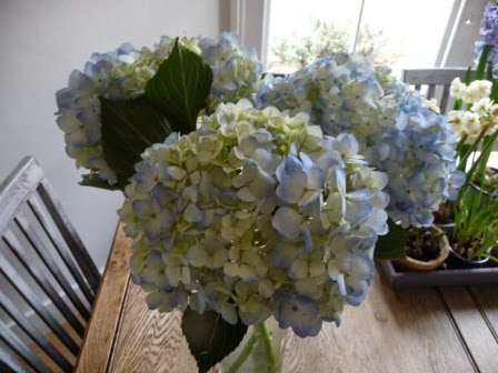 A closer view of the hydrangeas!