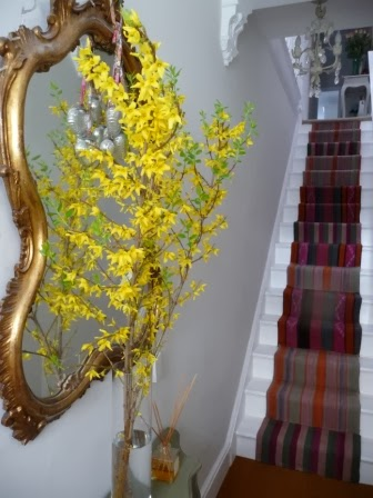 Three stems of Forsythia make a splash of colour to welcome people. I've had these for three weeks and they have all flowered and now young leaf shoots have appeared.  Great value in a vase!!