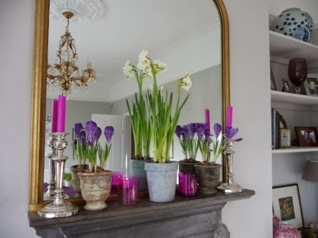 Purple Crocuses and Early Cheers on the mantelpiece