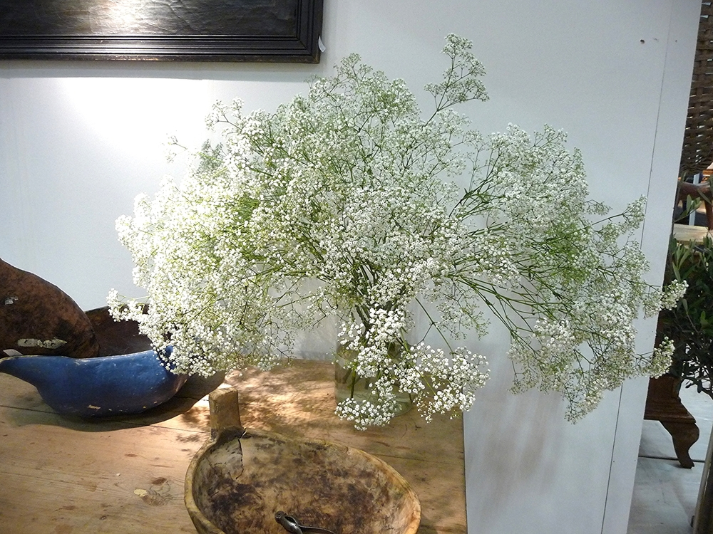 Stunning bowl of Gypsophilia