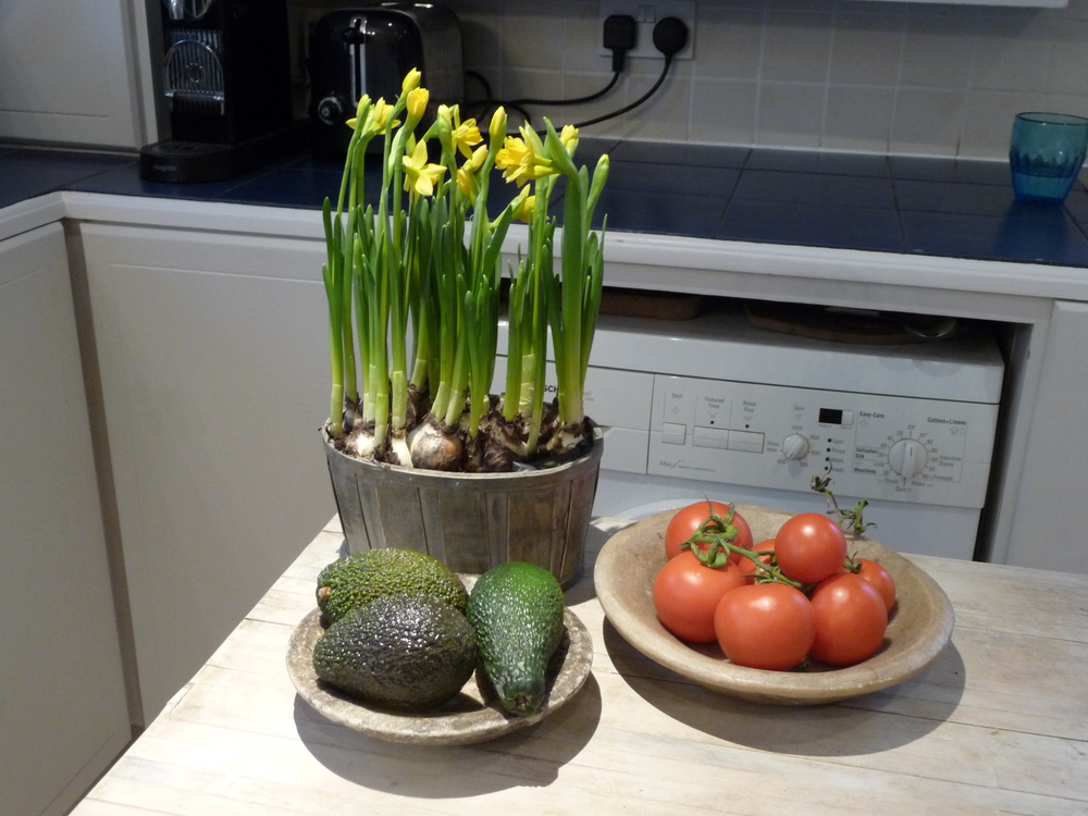 A pot of miniature daffodil bulbs on the butcher's block in the kitchen