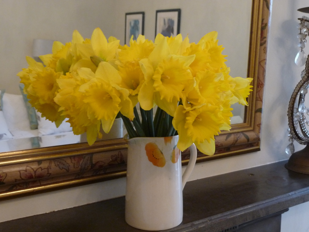 Bunches of daffodils are currently on sale in all the supermarkets and florist shops. They are ridiculously cheap to buy so don't hold back - cram them into any vase, jar or container.  That pop of yellow in a room is very impactful