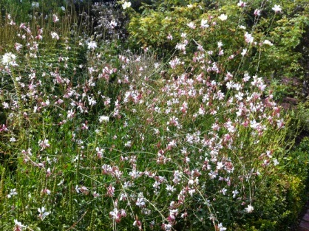 sissinghurst-whitegarden.3.jpeg