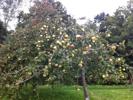 sissinghurst-orchard.1.jpeg