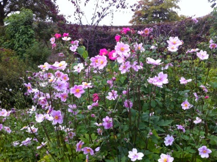 sissinghurst-flowers.8.jpeg