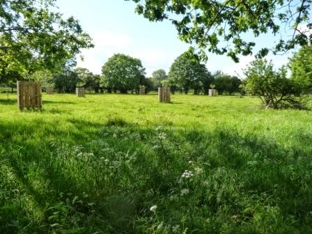 The water meadows opposite Petersham Nurseries